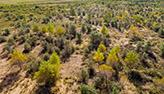 مساحة الغابات الاصطناعية الصينية تحتل المركز الاول فى العالم