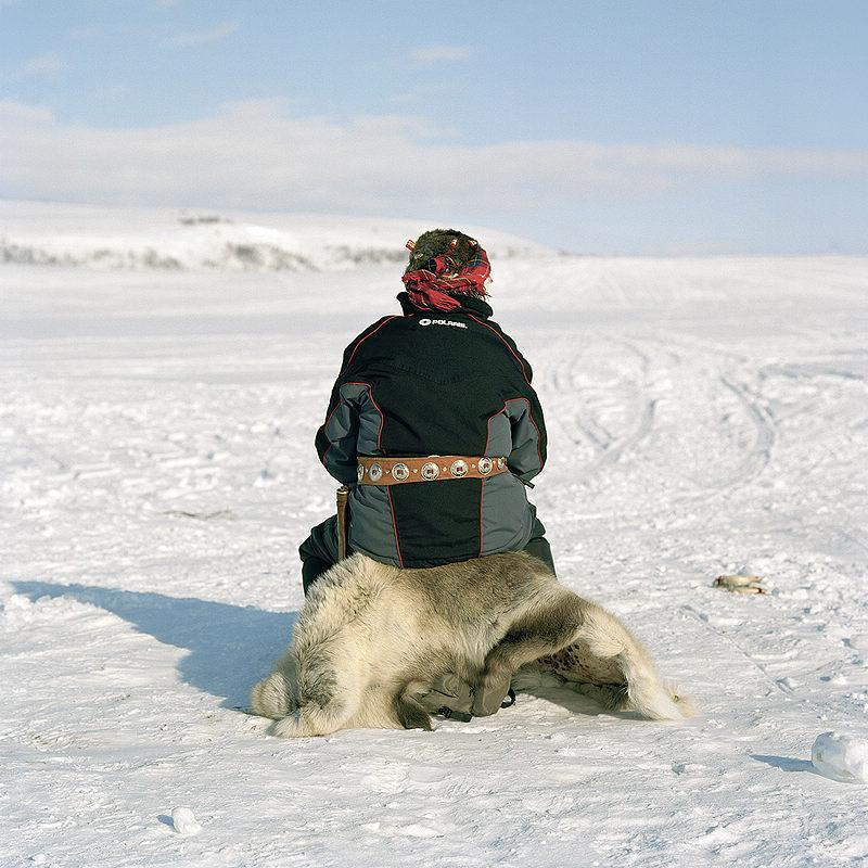 آخر السكان الأصليين بأوربا الساميون الذين يعيشون في منطقة القطب الشمالي People S Daily Online